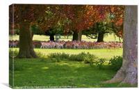 Holkham Park, Canvas Print