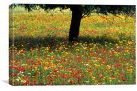 Mallorcan Wild Flowers, Canvas Print