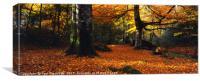 Devon Woods in Autumn, Canvas Print