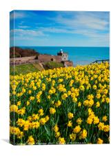 Daffodils at Sidmouth, Canvas Print