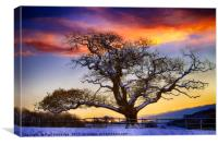 Snow covered Tree at Sunset, Canvas Print