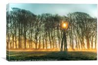 Winter Sun and Mist, Canvas Print