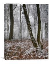 Trees in Hoar Frost, Canvas Print