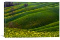 Green hills and flowers, Canvas Print