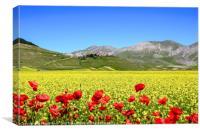 Flowery field, Canvas Print