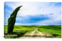 Tuscany dirt road, Canvas Print