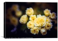 Close up of some small roses, Canvas Print