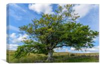 A tree in the Cairngorms National Park, Canvas Print