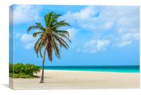 Palm tree alone on the white sand of the Eagle Bea, Canvas Print