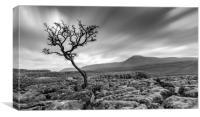 Lone Tree Barren Land, Canvas Print