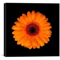 Orange Is The New Black, Canvas Print