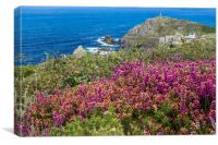 Heather at Cape Cornwall, Canvas Print