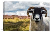Can I Help Ewe?, Canvas Print