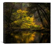 Autumn Trees River Derwent, Canvas Print