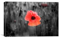 Lone Poppy, Canvas Print