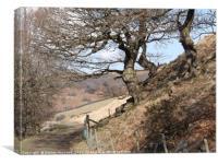 Twisted oaks, Canvas Print
