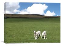 Lambs at Mossy Lea, Canvas Print