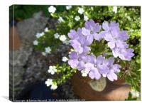 Purple Verbena, Canvas Print