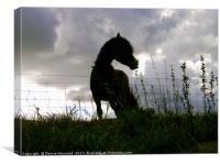 Horse Silhouette , Canvas Print