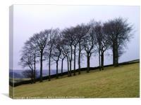 Twenty Trees, Canvas Print
