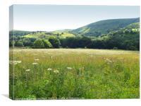 Flower meadow in The Peaks, Canvas Print