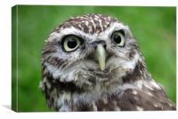 Owl Portrait, Canvas Print