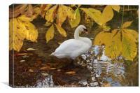 Autumn Swan                              , Canvas Print