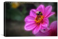 Pollen Harvest, Canvas Print