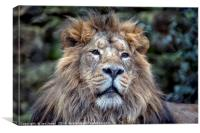 The African Male Lion, Canvas Print