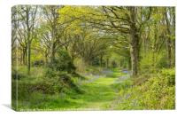 Woodland Walk, Canvas Print