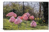 Pink Flamingos, Canvas Print