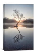 Lone Tree., Canvas Print