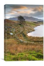 Llyn Dywarchen Tree., Canvas Print