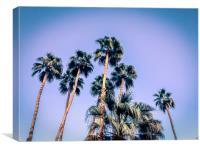 Palm Trees Palm Springs Summer, Canvas Print
