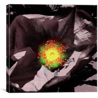 Sunburst In Flower, Canvas Print