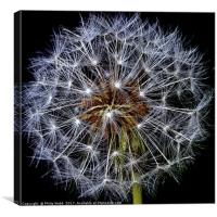 Dandelion Fluff , Canvas Print