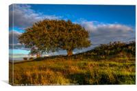Windswept Tree, Canvas Print