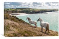 Welsh Ponies , Canvas Print