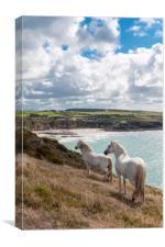 Welsh Ponies Church Bay, Canvas Print