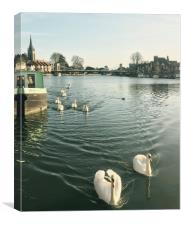 Swans on the river Thames, Canvas Print