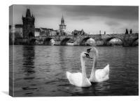 Prague Swans, Canvas Print