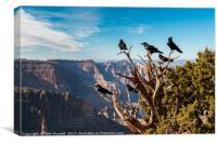 Grand Canyon Raven, Canvas Print