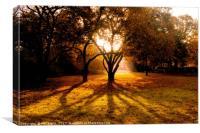 Autumn Shadows, Canvas Print