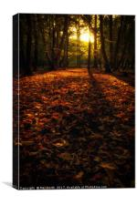 Autumn in Epping, Canvas Print