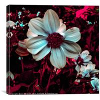 Red Floral Abstract, Canvas Print
