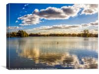 Loner on the Lake, Canvas Print