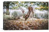 Wild Deer, Canvas Print