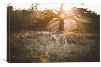 Deer at Sunset, Canvas Print