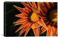 Orange Flower (Close-up) Macro, Canvas Print
