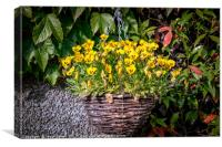 Yellow Pansies In a Hanging Baskets, Canvas Print